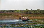 Everglades56(js).jpg