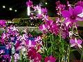 Exposição Nacional de Orquídeas de Catanduva no Colégio Nossa Senhora do Calvário - Colegião - panoramio (2).jpg