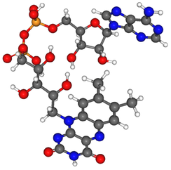 Ball and stick model of a minor tautomer of FAD [(2R,3S,4R,5R)-5-purinyl, -3,4-dihydroxy, -2-yl][(2R,3S,4S)-2,3,4-trihydroxy]