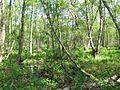FFH 2325-301, Ohmoor, 11, Garstedt, Landkreis Segeberg.jpg