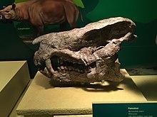 FMNH Coryphodon.jpg