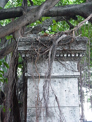 English: Vines and facade of pillar at the Uni...