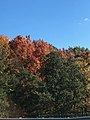 Fall Colors in Traverse City.jpg
