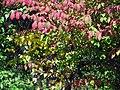 Fall colors (6175575777).jpg