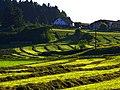 Farmers Are Artists - panoramio.jpg