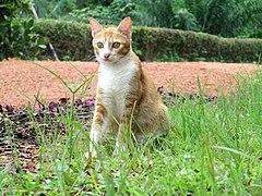 240px felis catus