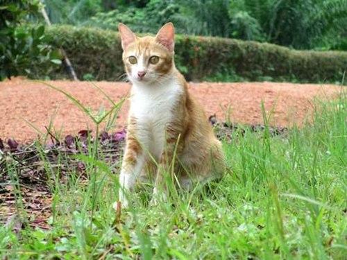 500px felis catus