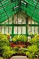 Fern House Ooty Botanical Garden (125298853).jpeg