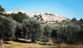 Ferrandina e le piante di ulivo.png