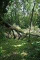Feuchy.- Espace naturel départemental le marais (3).JPG