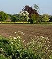 Field near Grove Farm - geograph.org.uk - 1279685.jpg