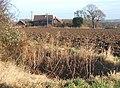 Field scene, Barking Tye - geograph.org.uk - 653690.jpg