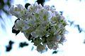 Fiore bianco.jpg