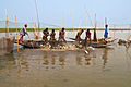 Fishing in the haor of Bangladesh.jpg