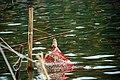Fishing net, Mahamaya Lake (01).jpg