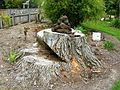 Flickr - brewbooks - Stump and rocks at Paloma Gardens.jpg