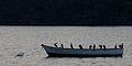 Flickr - ggallice - Fishermen's roost.jpg