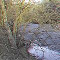 Flickr - jimf0390 - JimF 03-08-12 0004a still some ice left.jpg