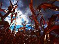 Flickr - paul bica - lost.jpg
