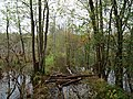 Flooded path in the Teufelsbruch swamp 13.jpg
