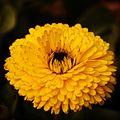 Flora001.jpg