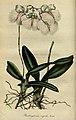 Flore des serres et des jardins de l'Europe - vol. 01 - page 011.jpg