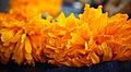 Flores de cempazúchitl.JPG