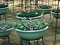 Flower-center133725.jpg