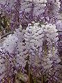 Flower 04376 n.JPG