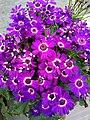 Flower 38 HDR.jpg