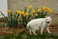 Flower cat (2447467700).jpg