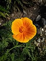 Flower photography - Photo by Giovanni Ussi 37.jpg