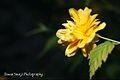 Flowers- yellow.jpg