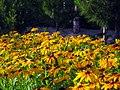 Flowers of Iran by qom city 11.jpg