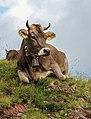 Flumserberg (Schweiz), Liegende Kuh -- 2011 -- 1526.jpg