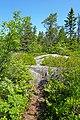 Follow the Path - Hopefully the right one... (29092900526).jpg