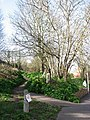 Footpath to St Martin's Close - geograph.org.uk - 722856.jpg