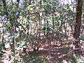 Forêt de la Coubre 002.jpg