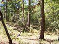 Forêt de la Coubre 020.jpg