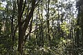 Forest in Mt.Amabiki 01.jpg