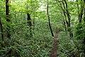 Forest in Mt.Futatsuya 02.jpg
