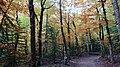 Forest inside Ordesa Valley, Ordesa y Monte Perdido National Park, Spain.jpg