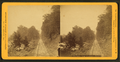 Forest view, Lewistown Branch, by Purviance, W. T. (William T.).png