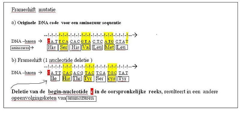 Frameshiftmutatie - WikiVisually