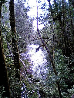 Franklin River Tasmania 2.jpg