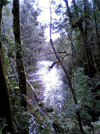 The Franklin River is in the Tasmanian Wildern...