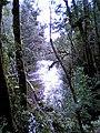 Franklin River Tasmania 2.jpg
