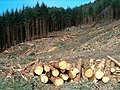Freshly-felled timber - geograph.org.uk - 157386.jpg