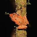 Frog (15954784936).jpg