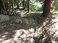 Fullerton Arboretum.JPG